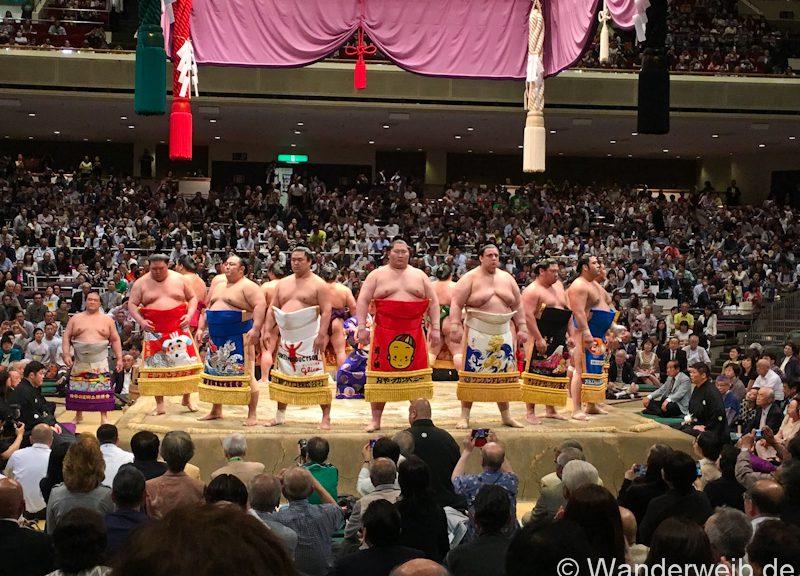 sumo (1 von 1)
